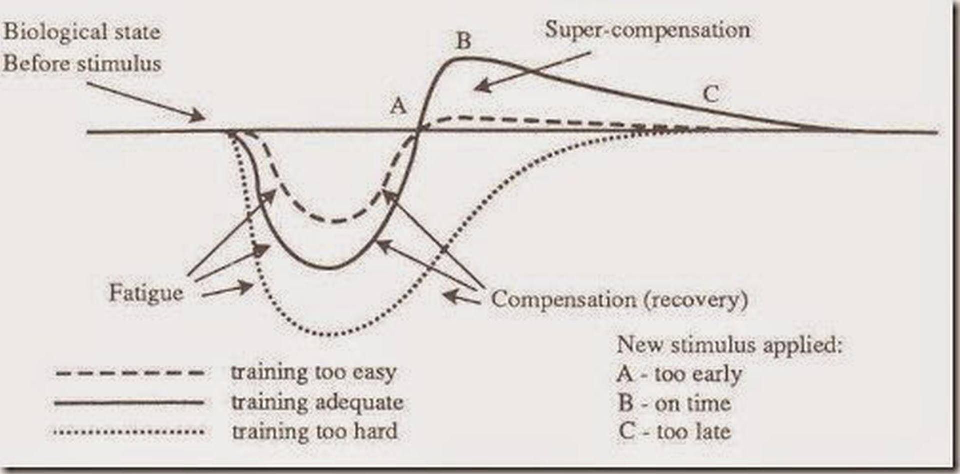 Superkompensacja – większe postępy! - Fabryka Siły
